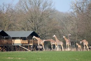 Knuthenbrog Safaripark